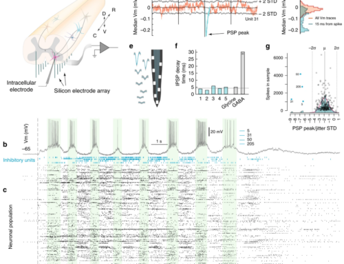 Paper in Nature Communications: Decoupling of timescales reveals sparse convergent CPG network in the adult spinal cord
