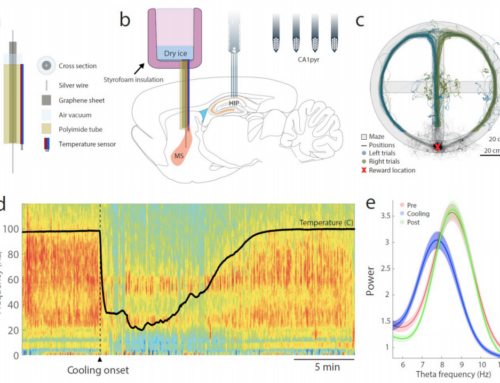 Paper on bioRxiv: Cooling of medial septum reveals theta phase lag coordination of hippocampal cell assemblies
