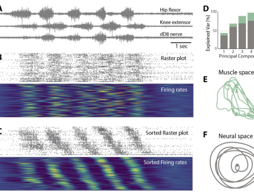New paper on bioRxiv: Movement is governed by rotational population dynamics in spinal motor networks